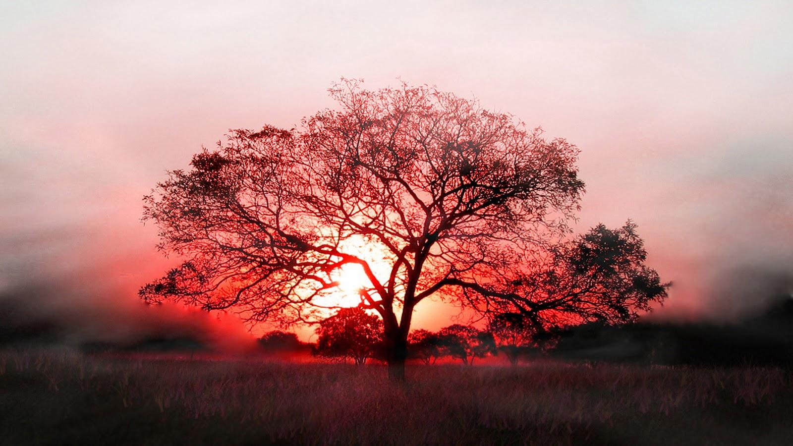 http://3.bp.blogspot.com/-Av70s_Ci2f0/TvcJ0oUHS_I/AAAAAAAAAA8/YTnGyIibbxk/s1600/Nature-sunshine-tree-wallpaper-hd.jpg