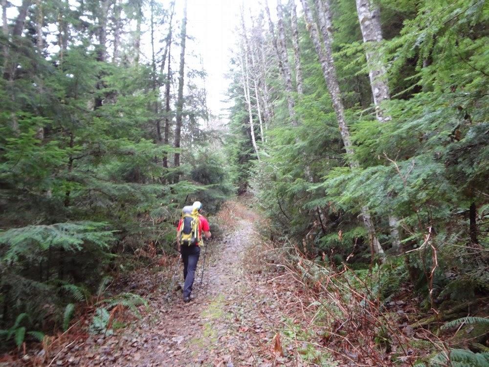 Hiking through the woods towards Brunswick Mountain