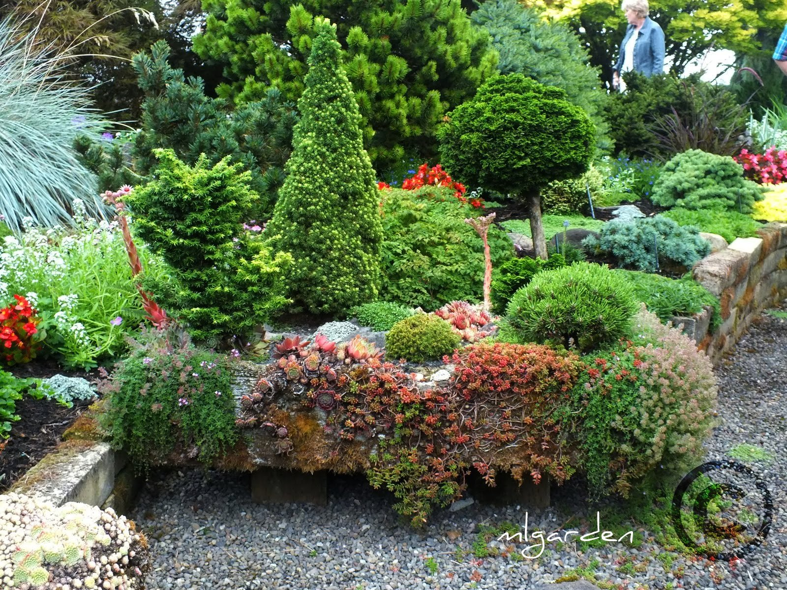 Dwarf conifer garden design native home garden design for Mini garden landscape design