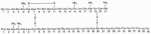 Struktur molekul insulin, hormon polipeptida. Hormon tersebut memiliki dua rantai, A dan B. Rantai A memiliki 21 asam amino, sedangkan rantai B memiliki 30 asam amino. Dua rantai tersebut berikatan satu sama lainnya dengan ikatan disulfida.