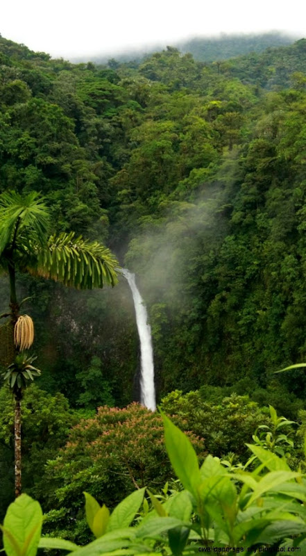Rainforest Wallpaper Iphone Wallpapers Gallery