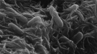 bateri-bio dari sel bakteria