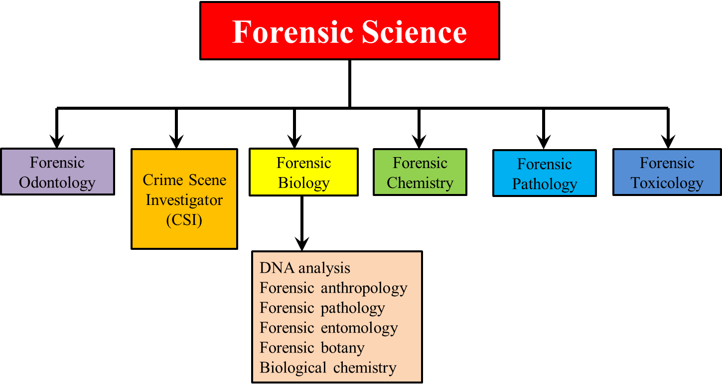 Forensic Science can i use we in an essay