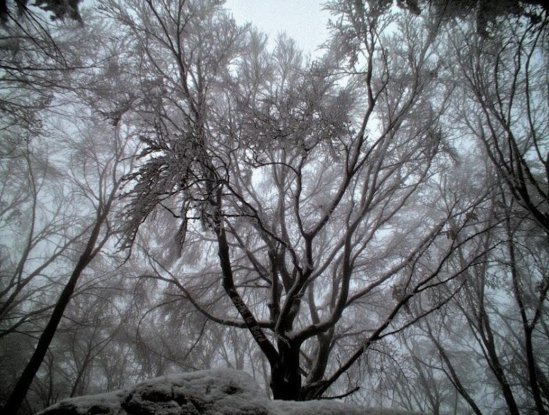 copaci trei caldari cozla piatra neamt