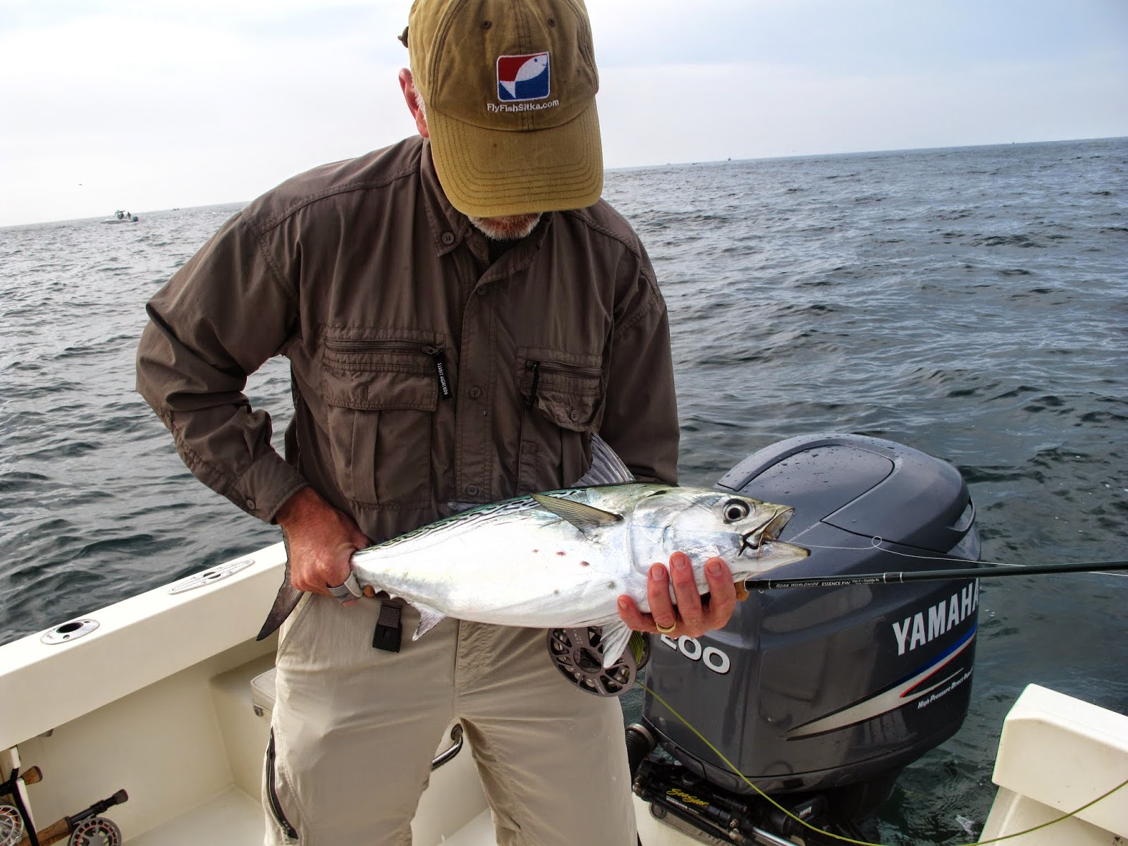 Boston fly fishing and report false albacore and bonito for Long island sound fishing