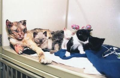 Scarlett, seekor kucing yang bertaruh nyawa demi anak-anaknya