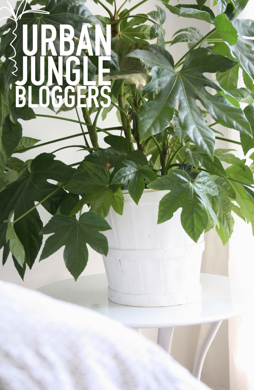 Urban jungle bloggers plant pots style space and stuff for Decoration urban jungle