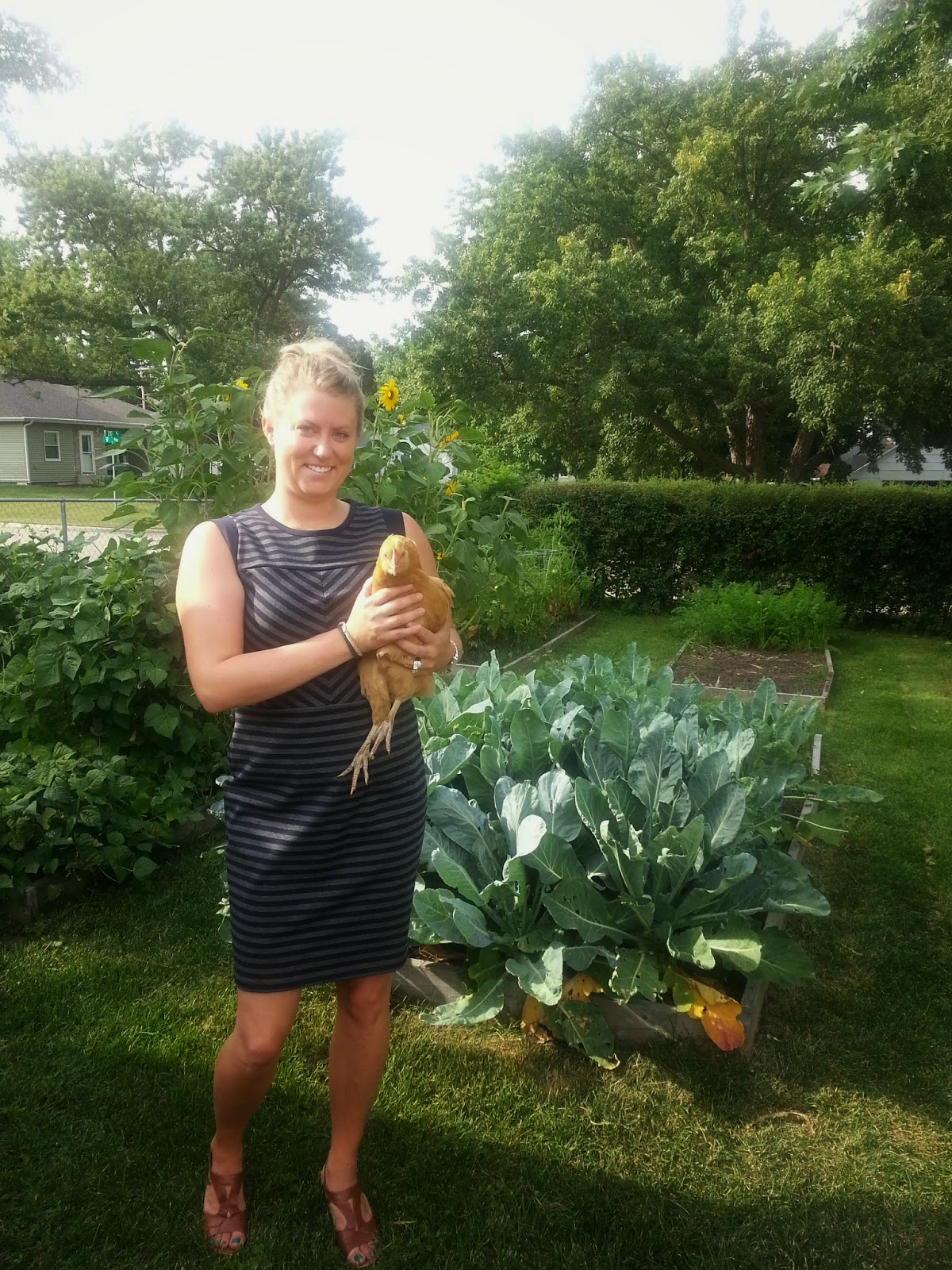 5 ways to feed chickens on a budget homegrown in the valley