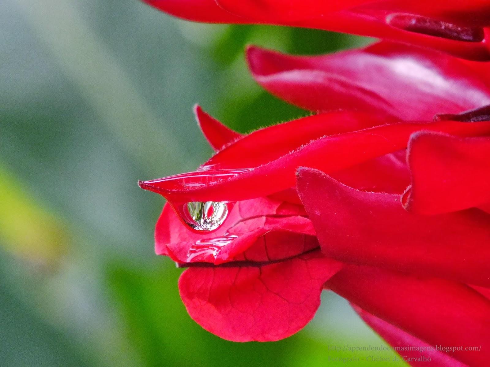 http://aprendendocomasimagens.blogspot.com/2013/12/sentimentos-beleza-felicidades.html - Com um simples beijo, marca-se o tempo. Com as belas e autênticas cores, embeleza-se a Vida. Com a simplicidade de um olhar, façamos Homenagens... Que nesse momento único e especial, todo Prato persista em cada pétalas a Felicidade...