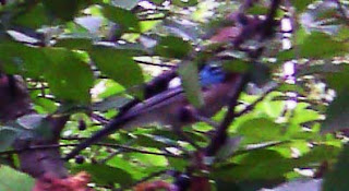 птица Луганск