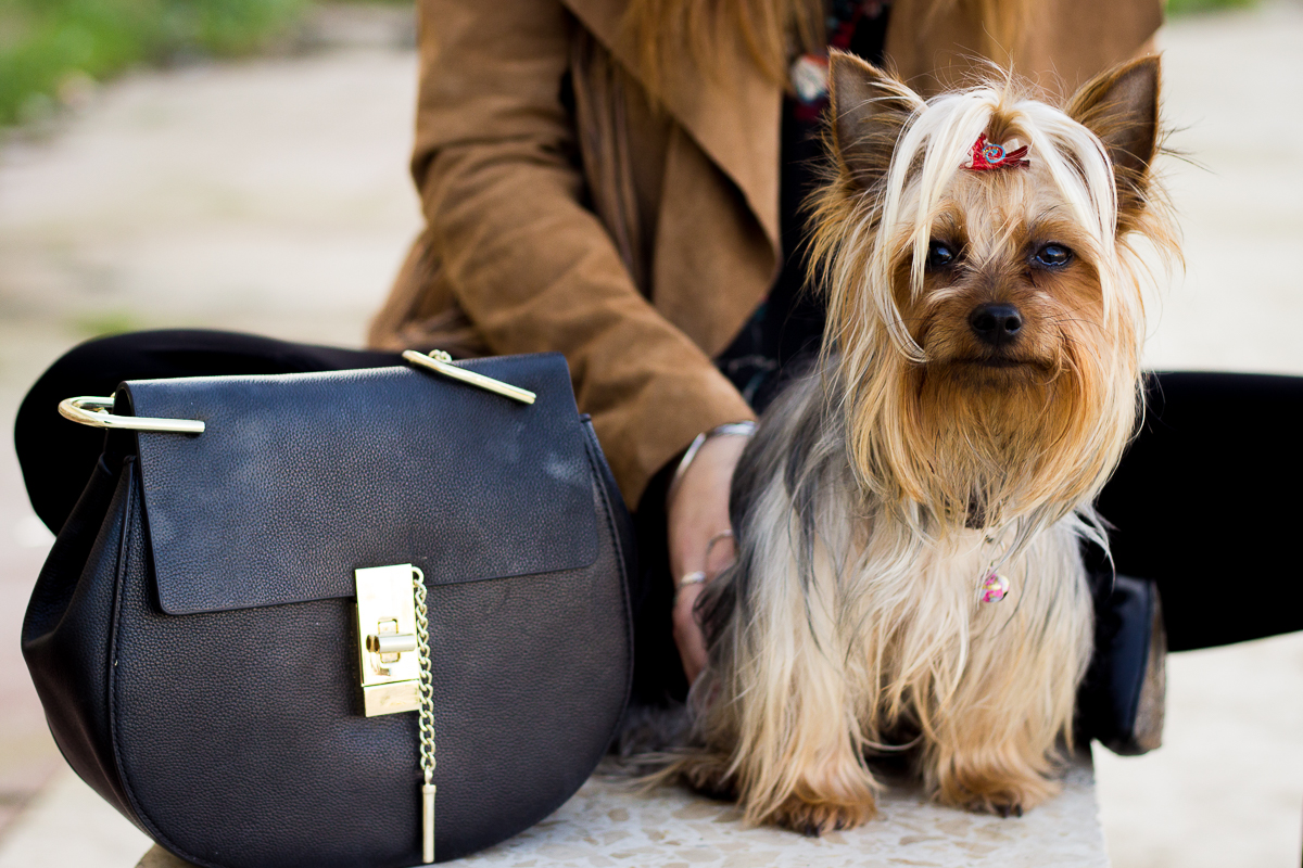 chloe bag and dog