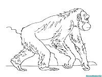 Mewarnai Gambar Gorila Berjalan Didalam Hutan