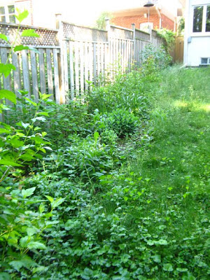Garden cleanup before by paul jung ecological and organic gardening services