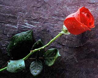 Gambar 2a. Bunga Mawar Merah