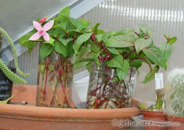 Priprema za zimu i za sljedeću cvjetnu sezonu  Cvjetna Oaza - Sve o cvijecu
