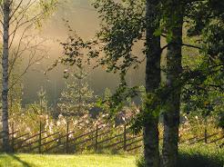 Morning mist 01.09.2014