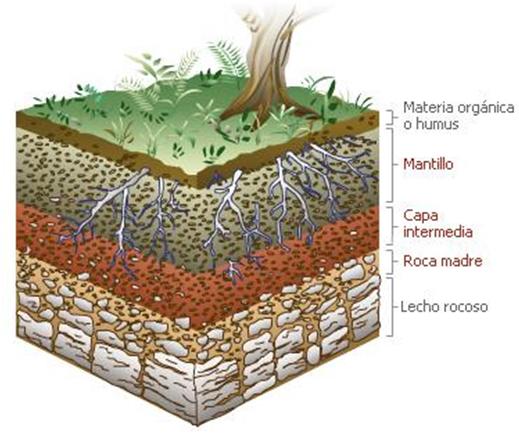 Las plantas qu necesita una planta para crecer for Como esta constituido el suelo