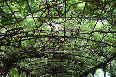 Jardin del mundo bot nico la concepcion viveros guzman for Vivero estructura