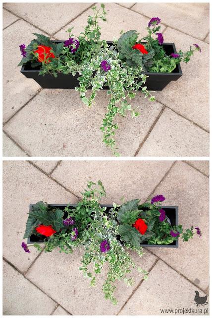 rośliny na balkon wschodni