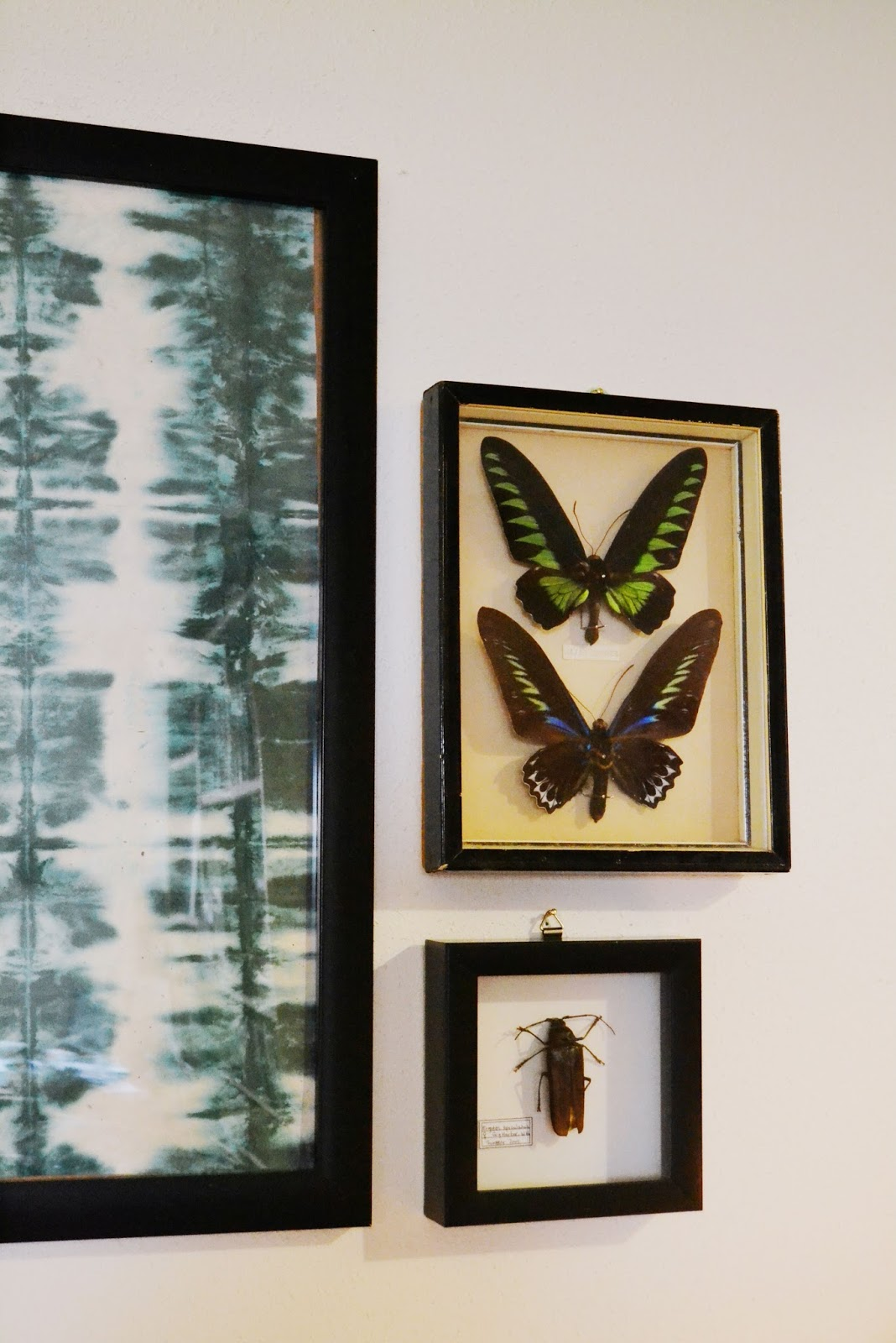 frames, art, entomology, bugs, butterflies, curiosities