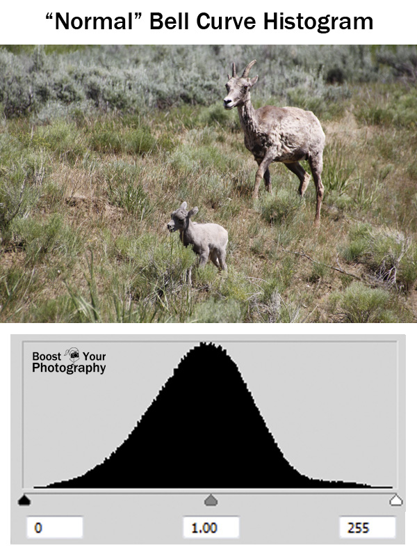 """Normal"" Bell Curve Histogram 