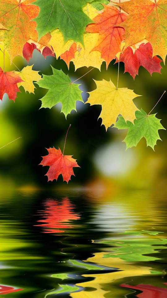 Autumn Maple Leafs  Galaxy Note HD Wallpaper
