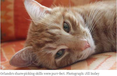 Orlando, seekor kucing yang berhasil mengalahkan para manajer keuangan profesional dalam perdagangan saham di Inggris
