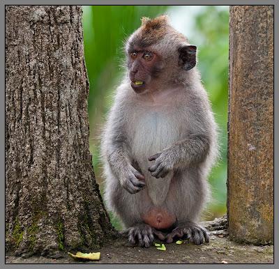 Fotografías de changos, monos, simios y primates