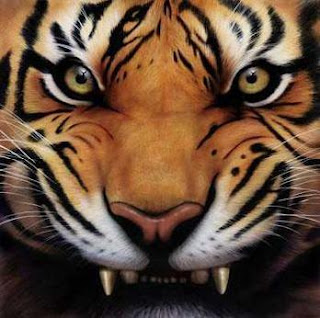 Angry Tiger Face Pictures - roaring tiger wallpaper