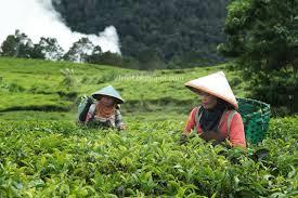 Penggunaan Lahan Dan Kegiatan Ekonomi Penduduk Indonesia Social