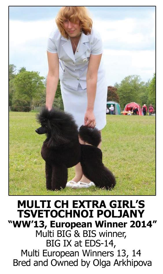 Best Dog Shampoo for Poodle