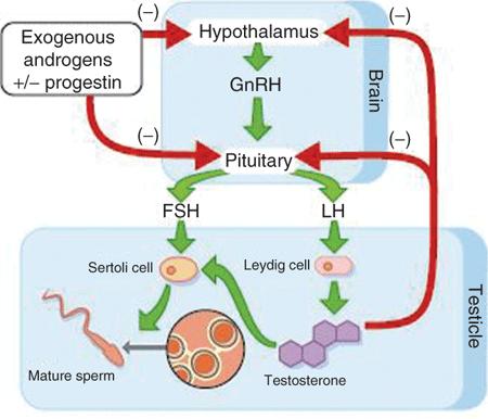 anabolic pill cycle