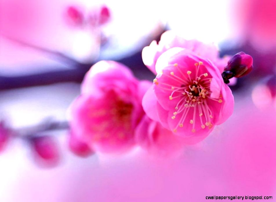 Pink Flowers Wallpaper 6902663