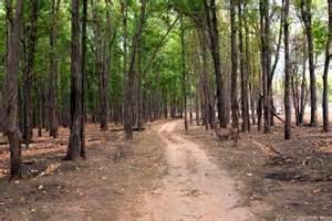 Afforestation activities
