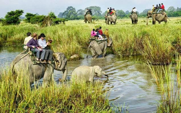 Image result for भारत के अभयारण्य