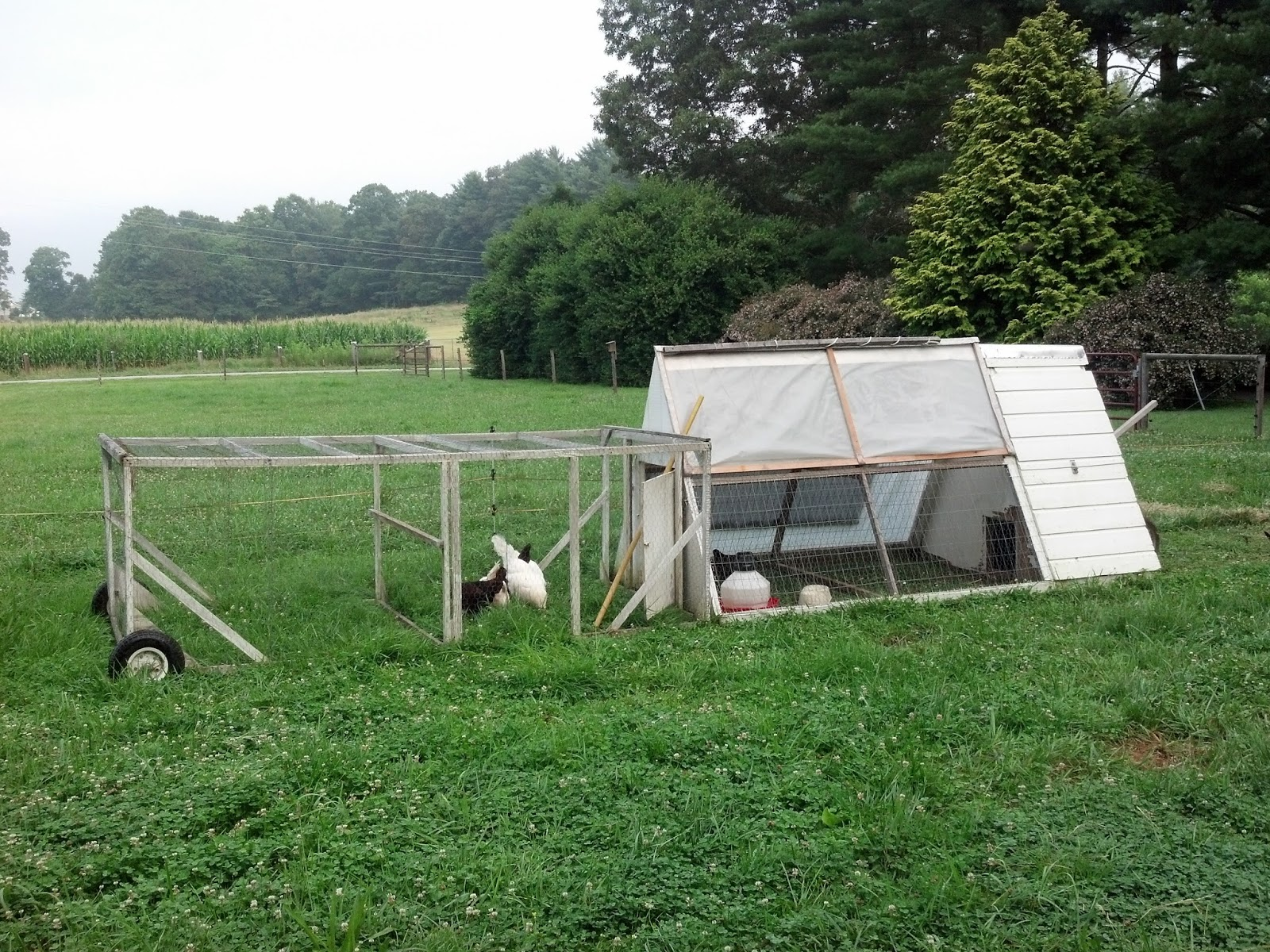 Our tiny farm in western nc 2013 for Big chicken tractor