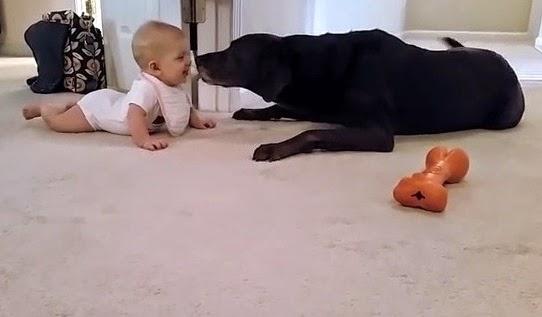 video bayi perempuan lucu
