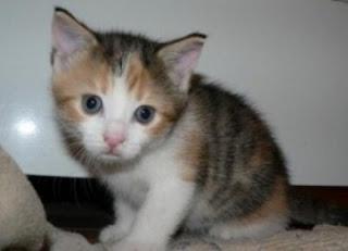 Tips Agar Bulu Kucing Tidak Bikin Kotor Rumah