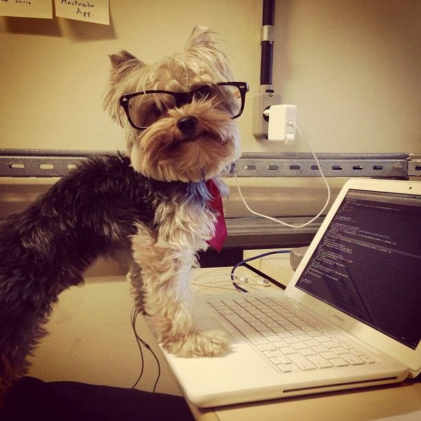 Cute dogs - part 3 (50 pics), dog wears glasses standing in front of computer