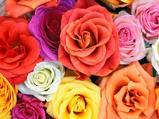 Arti Bunga Mawar