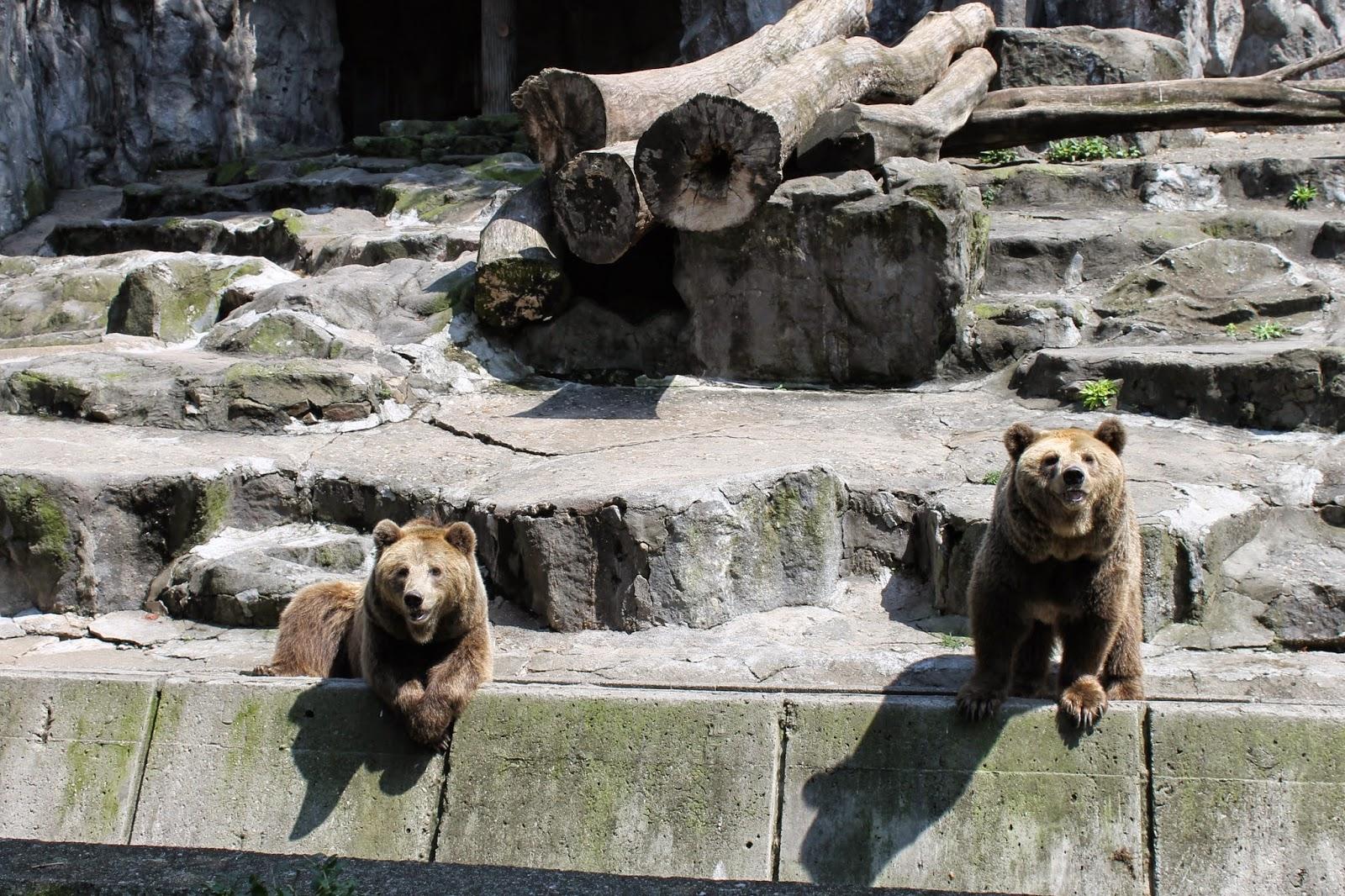 Seoul Zoo, Seoul, зоопарк в сеуле, сеул, корея, зоопарк, медведи