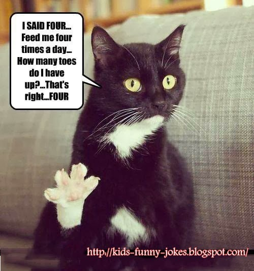 Funny Pictures For Kids Of Cats Funny-pics-of-catsFunny Pictures For Kids Of Cats