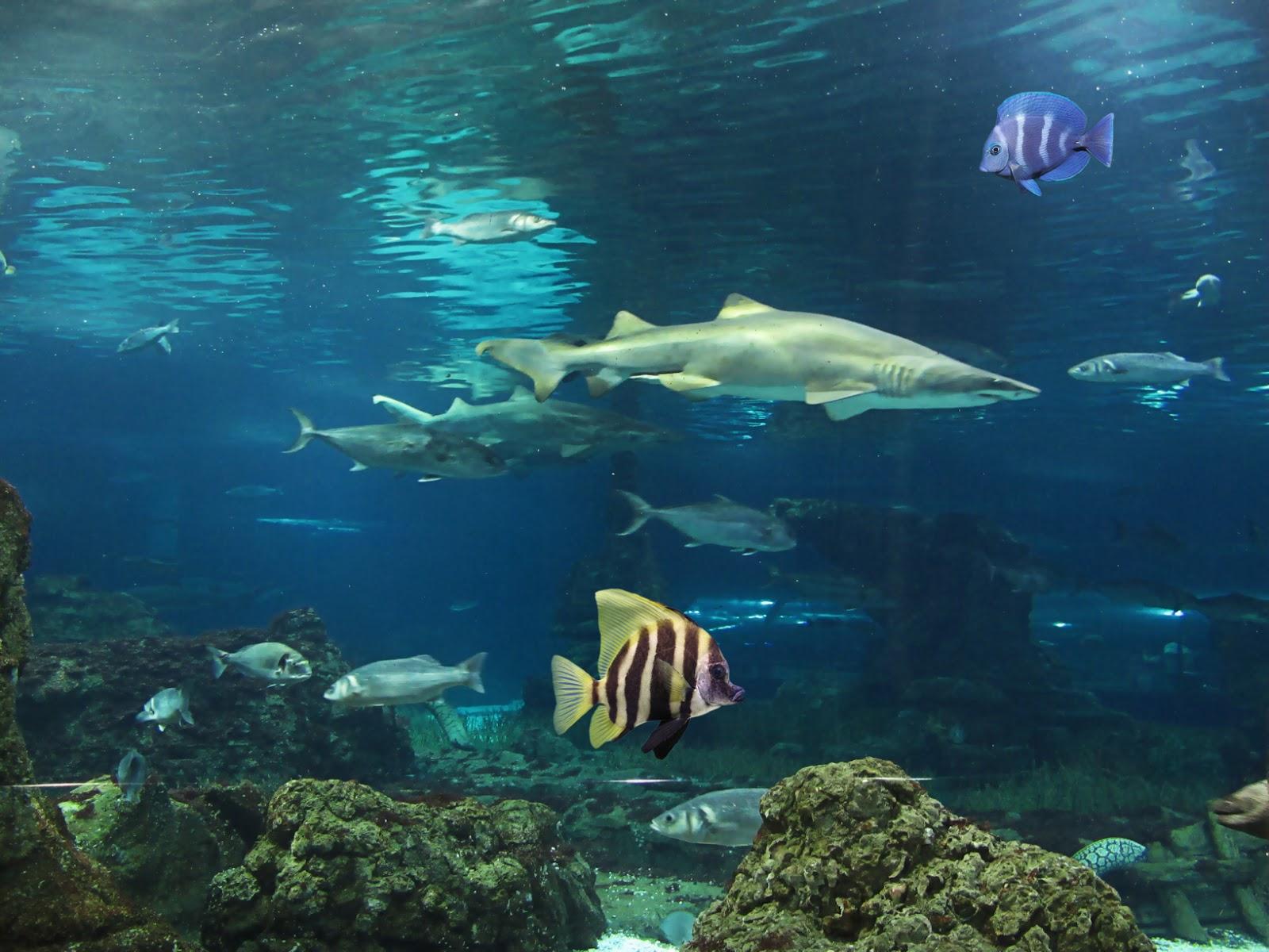 Pin it like visit site - Fotos fondo del mar ...