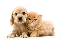 Cómo cuidar el Hogar de tus Mascotas