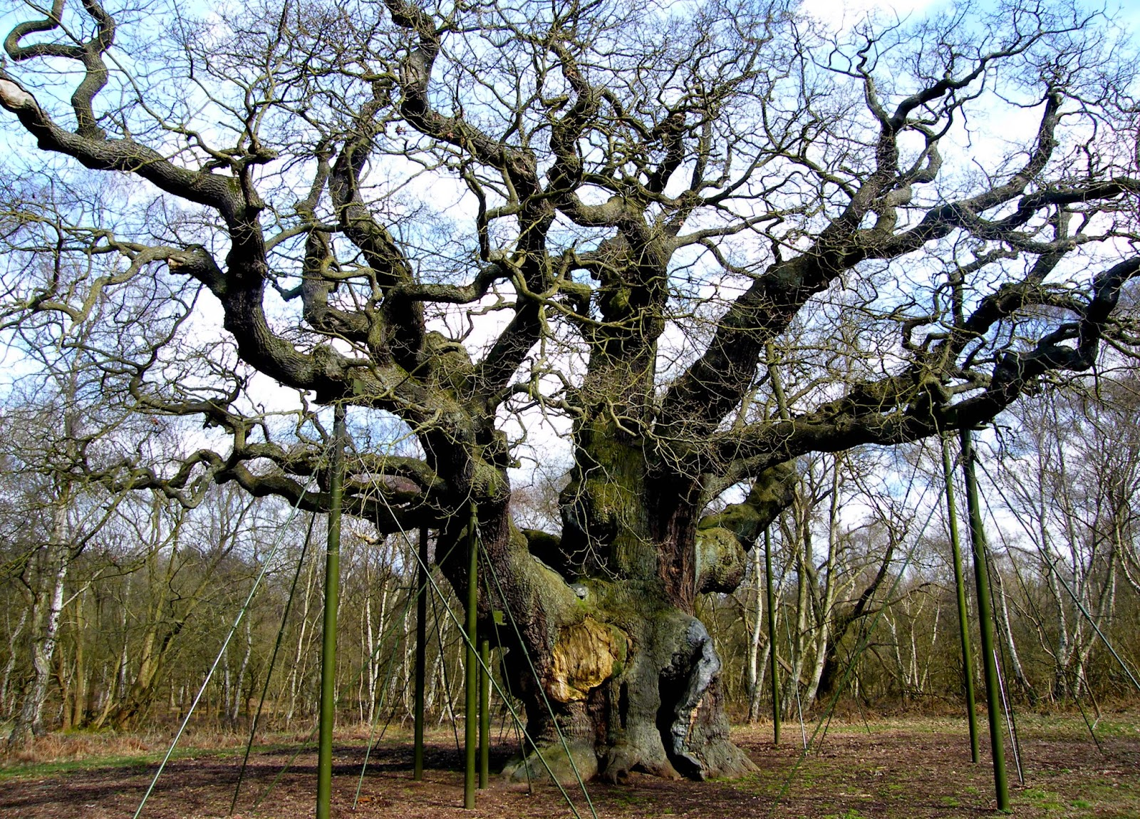"""the oak by lord alfred tennyson Tennyson, hallam, lord alfred maud is made static, in her """"own little oak given in the memoir and in r j mann's tennyson's 'maud' vindicated is that."""