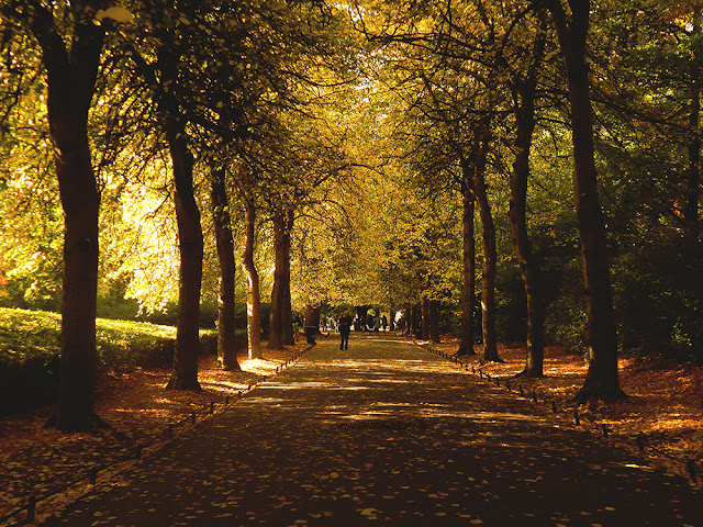 walk way surrounded by trees in St.Stephen's Green Dublin, Ireland