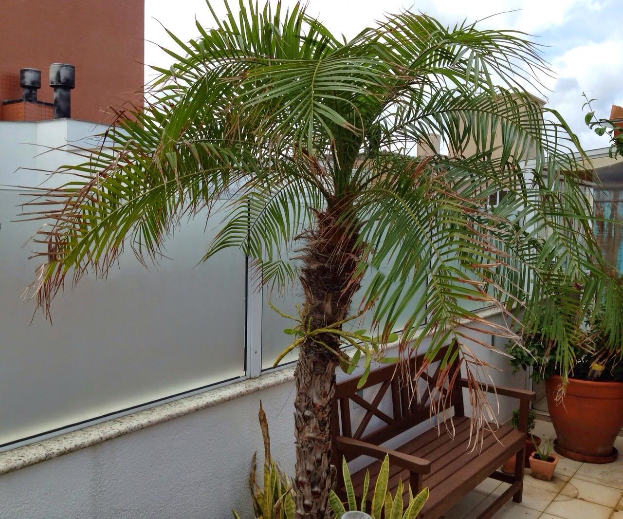 Cobertura Apartamento Para Aluguel de Temporada no Novo Campeche  #373218 1280x1066 Banheiro Cachorro Apartamento