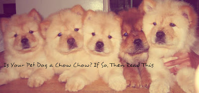 Is Your Pet Dog a Chow Chow? If So, Then Read This