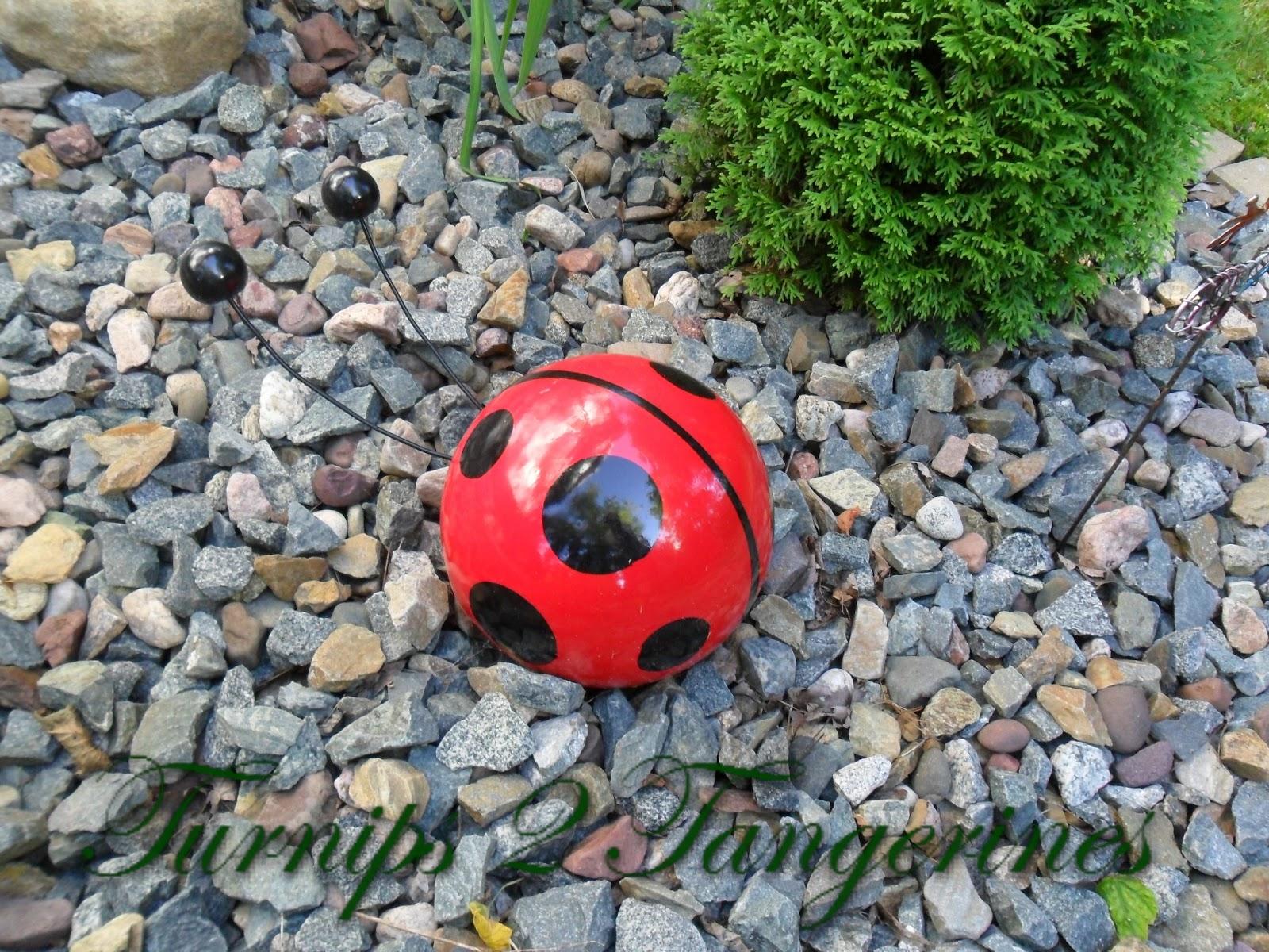 Ladybug Ladybug Fly Away Inicio