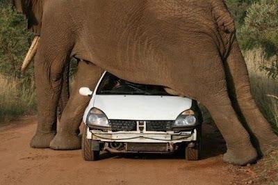 ما شعورك لو كنت مكان سائق السيارة ؟! ~ اضغطوا علي الصورة لتكبيرها :)